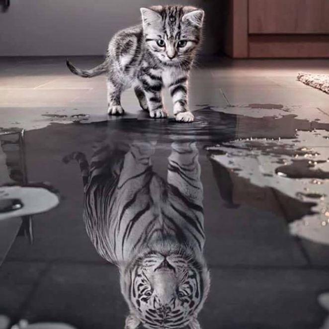 katze tiger.jpg